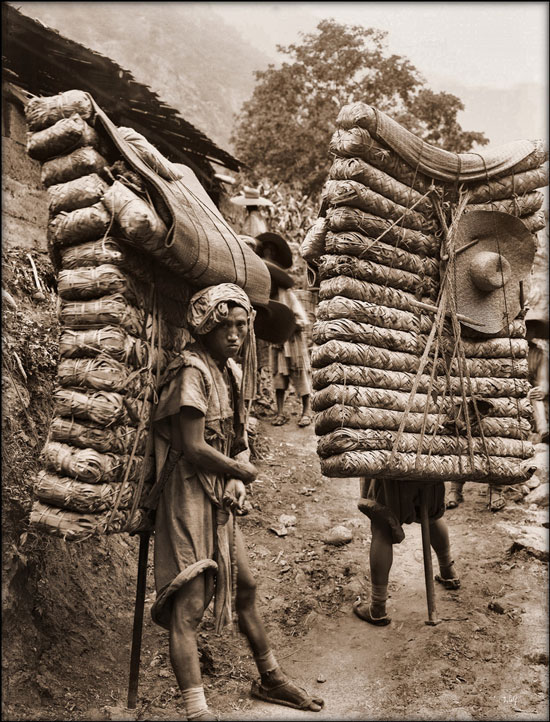 Men laden with tea, Sichuan, China [1908] Ernest H. Wilson